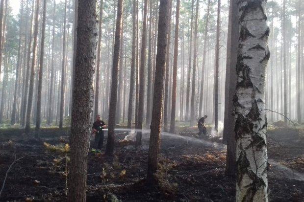 Kolejny pożar lasu i kolejny pożar ścierniska