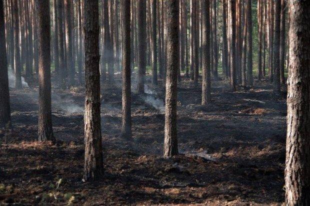 Pożar lasu w okolicach Wierzbowej. Akcja gaszenia ognia trwała ponad dobę