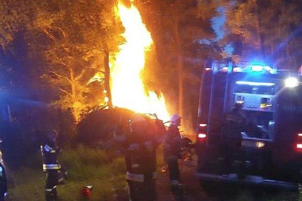 Pożar lasu w Tomaszowie