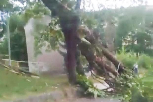 Drzewo zawaliło się na auto, w którym były trzy osoby
