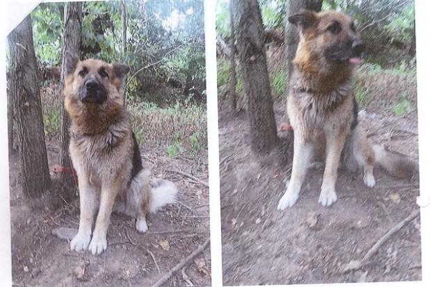 Policja szuka właściciela psa