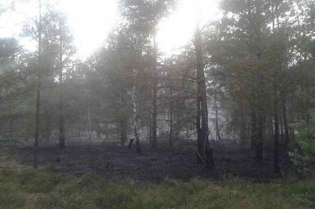 Pożar lasu w pobliżu Pstrąża