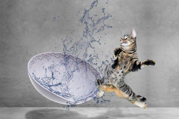 Z ceramiki bolesławieckiej robi… kuwety dla kotów. Jedną zamówił sam szejk Bahrajnu