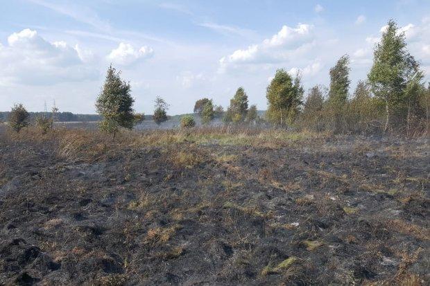 10 hektarów nieużytków spaliło się w Wykrotach