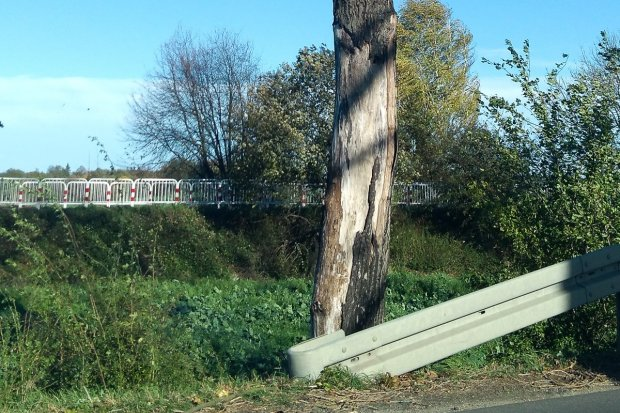 Co z niebezpiecznymi drzewami przy drodze wojewódzkiej?