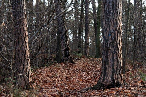 Koronawirus: wprowadzono zakaz wstępu do lasów