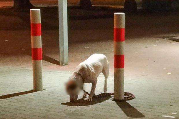 Ten pies nie powinien tak stać bez kagańca przed Biedronką
