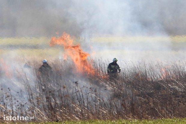 Pożar nieużytków niedaleko ronda na Łaziska
