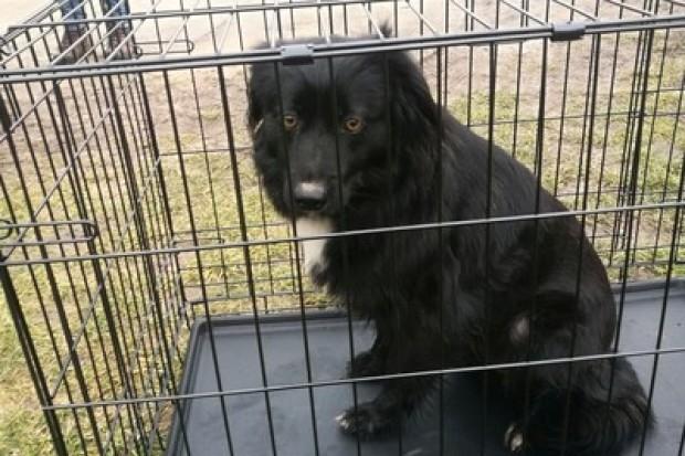 Policja poszukuje właściciela psa
