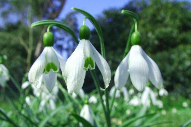 Pogoda: czeka nas jednodniowa wiosna, jutro znowu chłodno