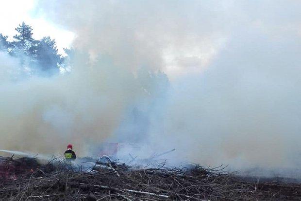 Pożar między Brzeźnikiem a Mierzwinem