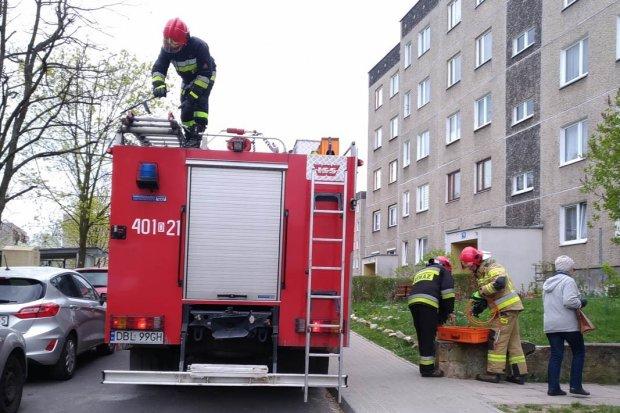 Akcja służb na Kleeberga