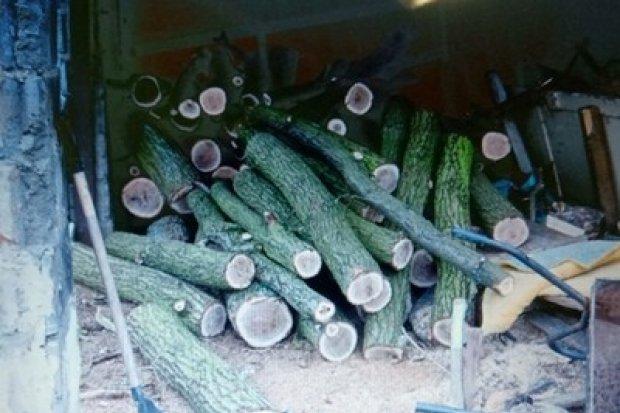 Ukradł pięć drzew z lasu, grozi mu do 5 lat odsiadki