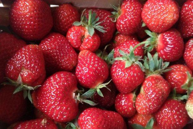 Sezon truskawkowy trwa. Ile płaciliście za kilogram?