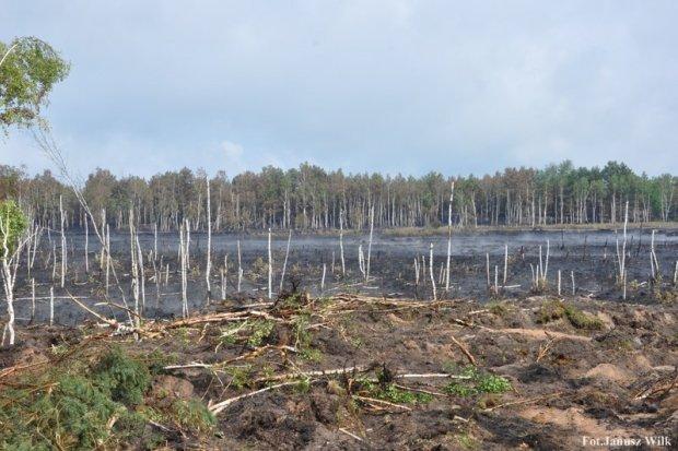 Pożar na poligonie, spłonęło 15 ha