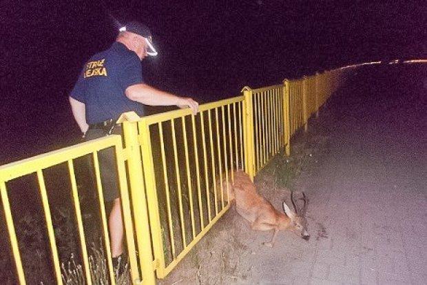 """Strażnicy miejscy i nocna akcja """"Sarna"""""""