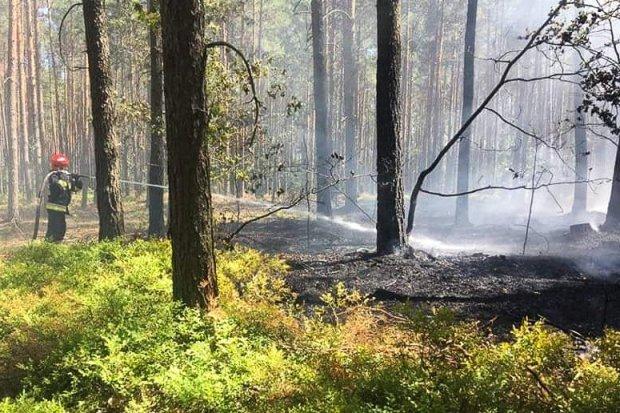 Pożar lasu między Osłą a Gromadką
