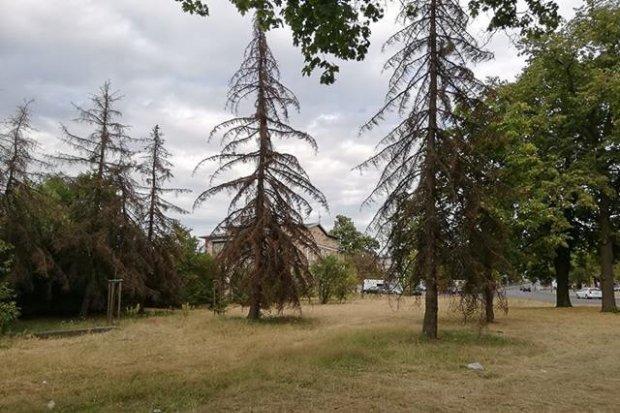 Co z drzewami przy dworcu PKP?