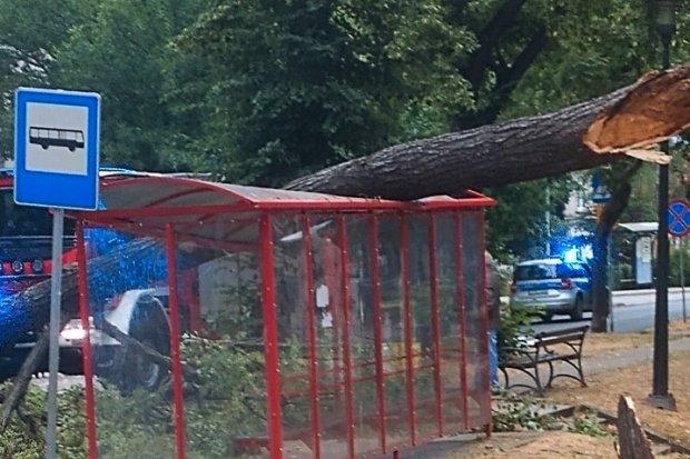 Drzewo spadło na przystanek na Sądowej
