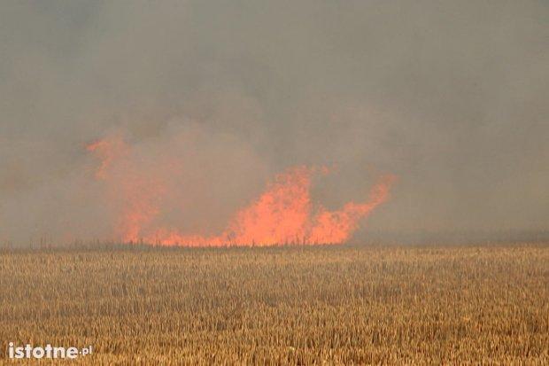 Kolejny pożar zboża na polu, tym razem w Żeliszowie
