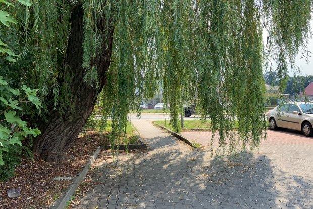 """Strasznie zarośnięty parking przed Biedronką. Życie """"towarzyskie"""" kwitnie w krzakach"""