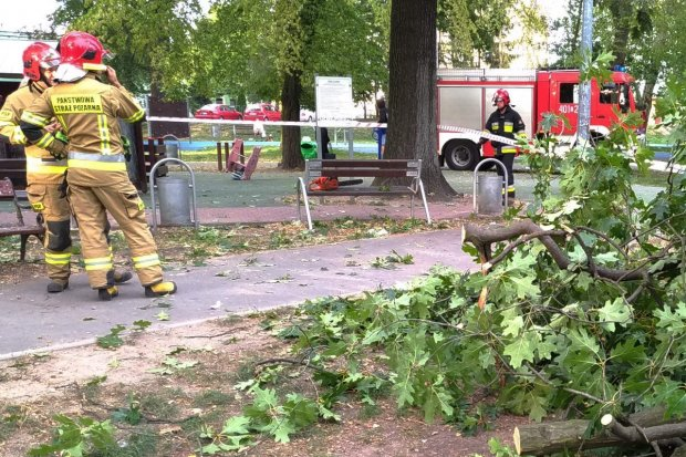 Wypadek w parku Bonina – na kobietę spadł konar drzewa