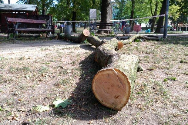 Akcja przycinania i wycinki drzew w parku Bonina