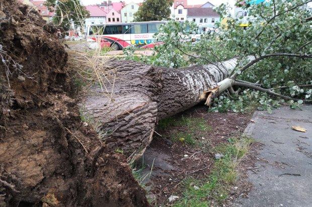Ogromne drzewo runęło na plac przy Łokietka