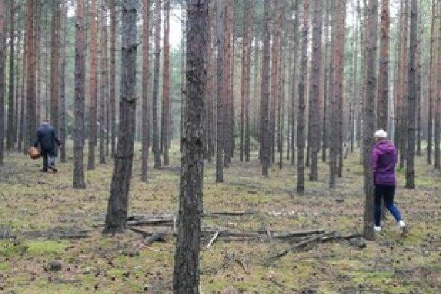W ciągu jednej godziny troje grzybiarzy zgubiło się lesie
