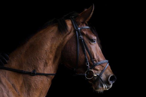 Czapraki, kantary, derki – niezbędne akcesoria do jazdy konnej – sprawdź czego potrzebujesz Ty i Twój koń