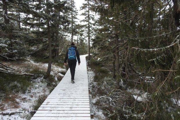 KPN: zielony szlak otwarty, zamknięty Wąwóz Kamieńczyka