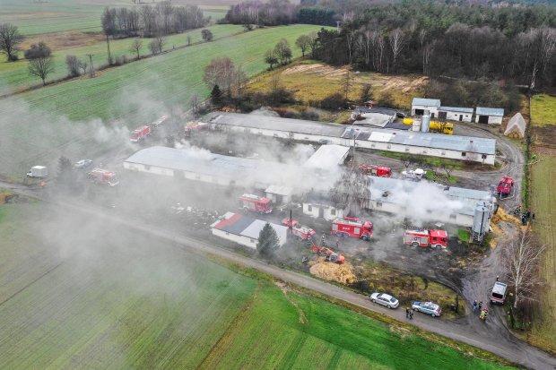 6 tysięcy indyków zginęło w pożarze w Krzyżowej
