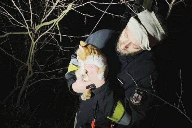 Nowogrodzieccy strażacy uratowali kotka, który utknął na drzewie