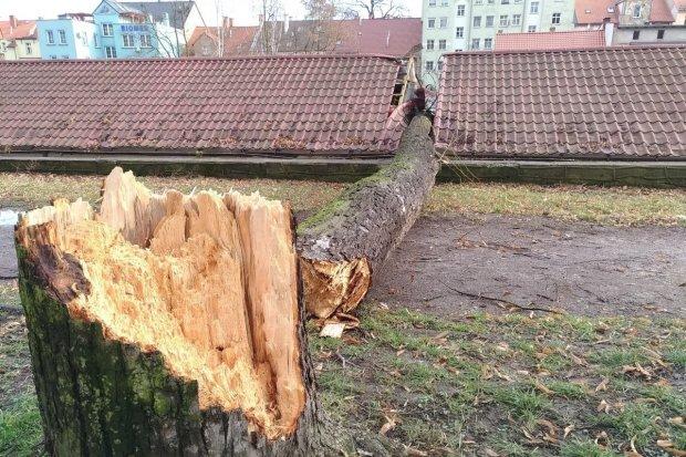 Orkan Sabina: drzewo runęło na garaże przy Komuny Paryskiej