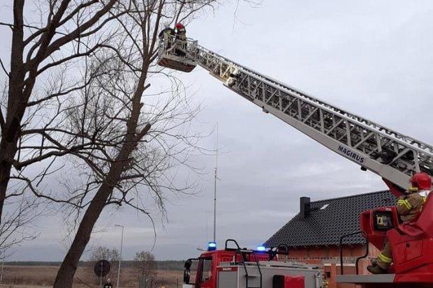 Akcja strażaków w Brzeźniku