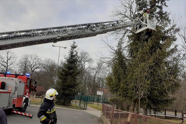 Akcja straży w Dąbrowie