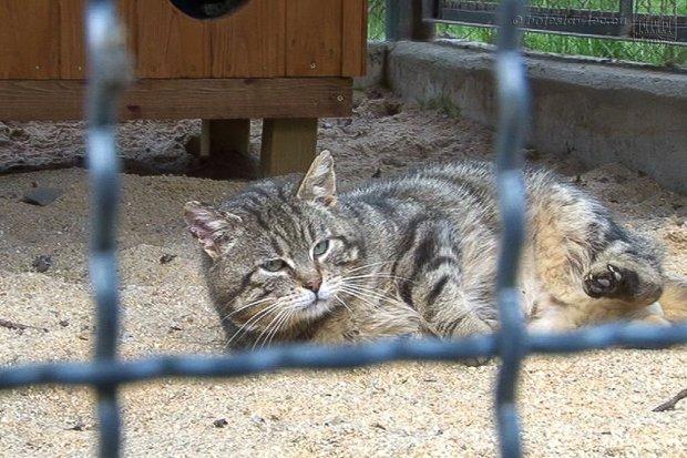 Jest program opieki nad zwierzętami bezdomnymi na terenie Bolesławca