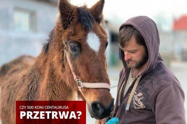 Boją się, że 500 koni i setki innych zwierząt umrze z głodu