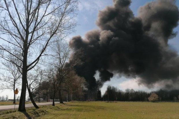 Wielki pożar koło Gryfowa. Dym widać z okolicznych miejscowości