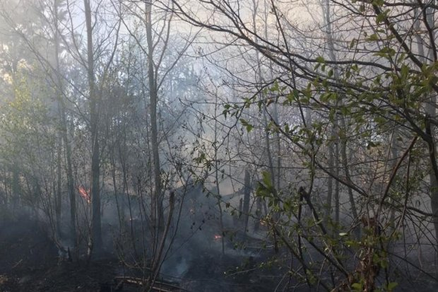Kolejny pożar lasu w Iwinach. Powiadomiono policję i Służbę Leśną