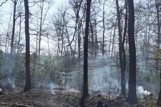 Spłonęło około hektara lasu