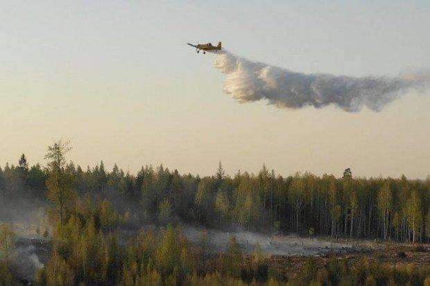 Susza w powiecie bolesławieckim! Prawie 30 pożarów w ciągu pięciu dni