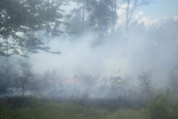 Pożar lasu w Iwinach