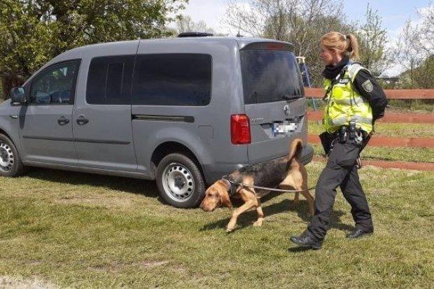 11 dzień poszukiwań Kacperka: policyjne psy z łodzi szukają zapachu