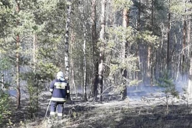 Pożar lasu koło Świętoszowa. Zadysponowano samolot