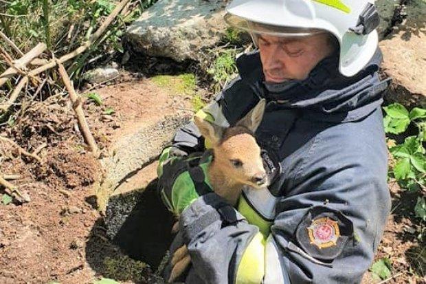 Strażacy z Trzebienia uratowali malutką sarenkę