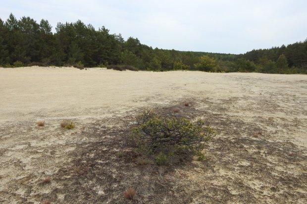 Walory wędrujących wydm. Wideo!