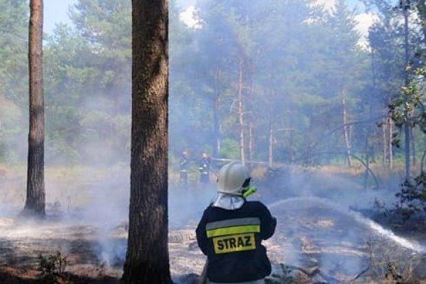 Pożar lasu w Motylach. Samolot w akcji