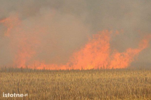 Pożar pola i kombajnu między Bolesławcem a Łaziskami