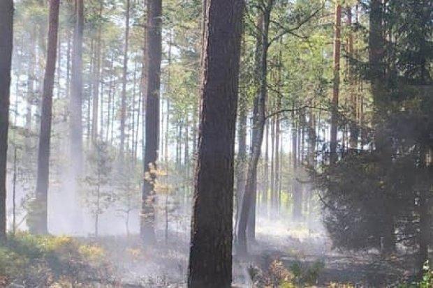 Pożar lasu przy A4